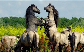Preview wallpaper Horses playful
