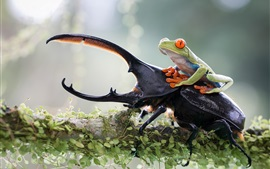 Insect and frog