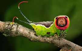 Preview wallpaper Insect, caterpillar