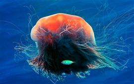 Medusa, tentáculos, oceano, peixe