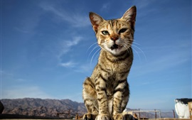 Kitten sitting at ground, blue sky