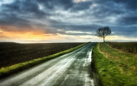 Morning, road, tree, fields, clouds