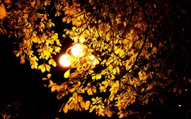 Preview wallpaper Night, lights, autumn, tree, leaves