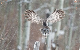 Preview wallpaper Owl flight, wings, winter, snow