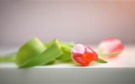 Preview wallpaper Pink flower, tulip, table, blurry