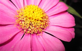 Preview wallpaper Pink petals flower macro photography, yellow pistil