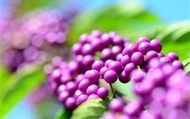 Preview wallpaper Purple berries, plants close-up