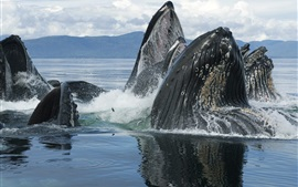 Sea animals, whales out of water
