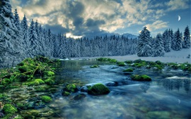 Spruce forest, snow, river, stones, moss, moon, dusk