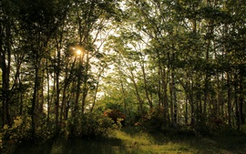Preview wallpaper Summer, forest, trees, sun rays, beautiful nature