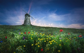 Summer, wildflowers, windmill, blue sky