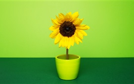Preview wallpaper Sunflower, room, green