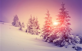 Preview wallpaper Thick snow, winter, forest, trees, warm sun