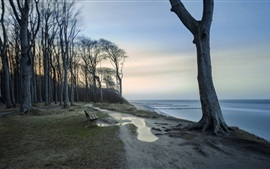 Trees, shore, coast, sea, dusk