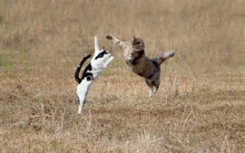 Two cats jumping in the grass