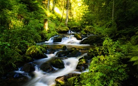 Water stream in the forest, creek, stones, trees, sun rays