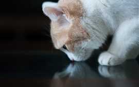 Preview wallpaper White cat sniffing, black background