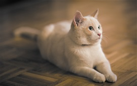 White cat stay on the flooring
