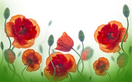 Wildflowers, poppy, red flowers