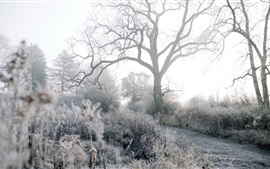 Winter, frost, trees, grass, path, morning