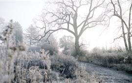 Invierno, helada, árboles, hierba, camino, mañana