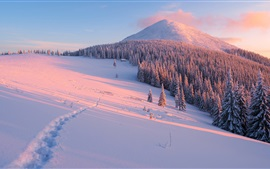Winter, slope, trees, snow, mountains, sun rays