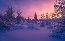 Preview wallpaper Winter, snow, sunset, forest, trees, dusk