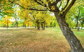Autumn, park, trees, leaves, ground