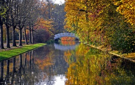 Outono, parque, árvores, rio, ponte, folhas amarelas