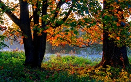 Preview wallpaper Autumn, trees, forest, foliage, grass, sunshine