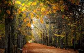Preview wallpaper Autumn, trees, path, park, bench