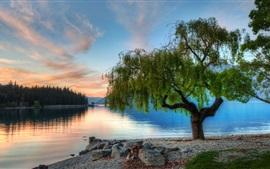 Natureza, lago, árvores, manhã, amanhecer