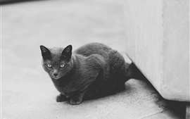 Black and white picture, grey cat
