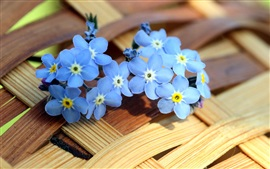 Preview wallpaper Blue forget-me-not flowers