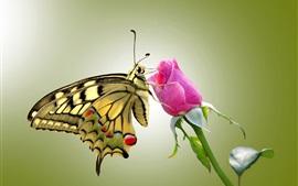 Бабочка и розовые розы