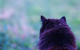 Preview wallpaper Cat back view