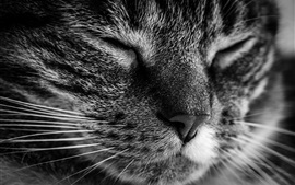 Preview wallpaper Cat face macro photography, sleeping