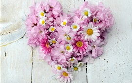 Chamomile, chrysanthemum, pink and white flowers, love heart
