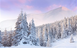 Cold winter, forest, mountains, thick white snow, dawn