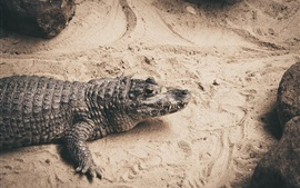 Preview wallpaper Crocodile, reptile photography