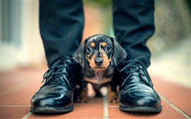 Preview wallpaper Cute black dog, foot