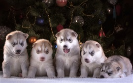 Preview wallpaper Cute dogs, husky puppies