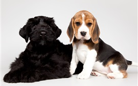 Preview wallpaper Cute puppies, black and spotted dogs