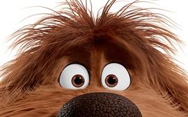 Aperçu fond d'écran Duke, la vie secrète des animaux de compagnie