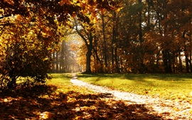 Preview wallpaper Forest, trees, road, autumn, sun rays
