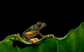 Preview wallpaper Frog, leaf, wildlife