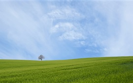 Preview wallpaper Green field, tree, blue sky, clouds