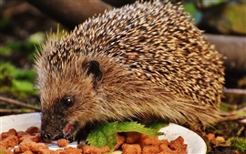 Preview wallpaper Hedgehog eating food