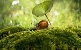 Insect macro photography, snail, umbrella, moss