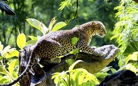 Leopardo, depredador, hojas